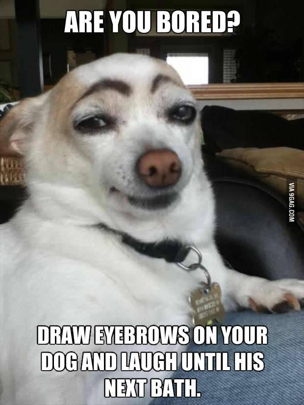 Make eye brows on your dog cats face