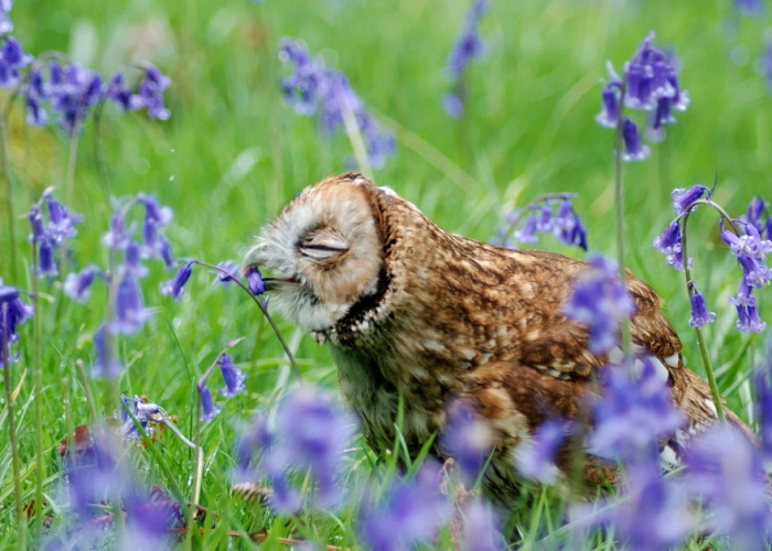 Animals Sniffing Flowers (10)