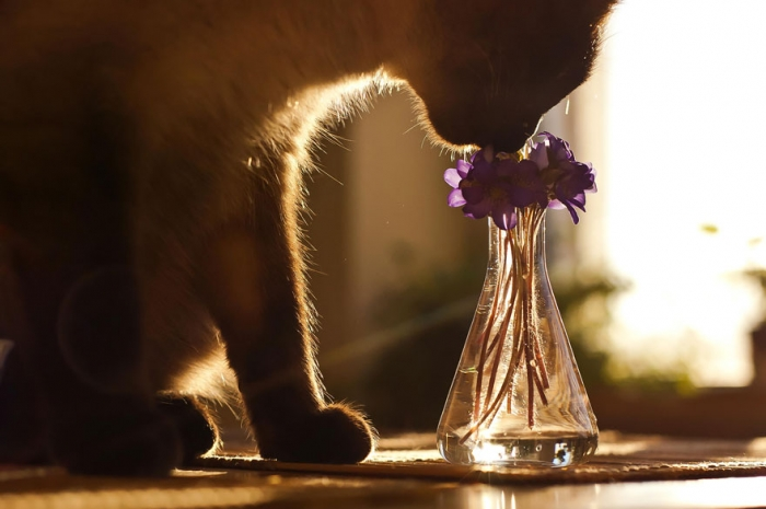 Animals Sniffing Flowers (12)