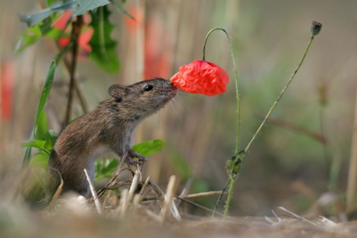Animals Sniffing Flowers (14)