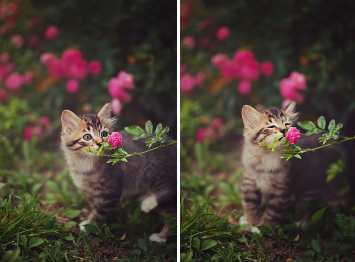 Animals Sniffing Flowers (2)