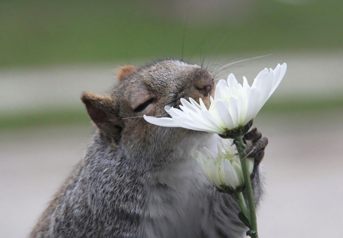 Animals Sniffing Flowers (4)