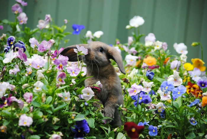 Animals Sniffing Flowers (5)