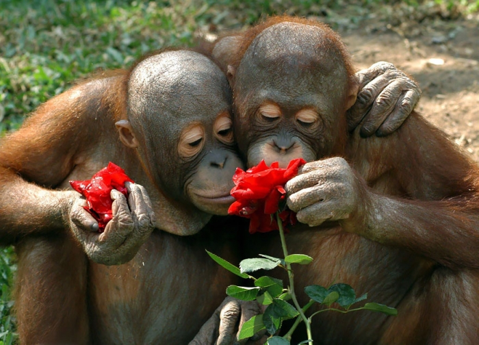 Animals Sniffing Flowers (7)