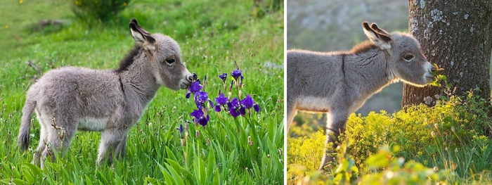 Animals Sniffing Flowers (8)