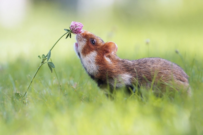Animals Sniffing Flowers (9)