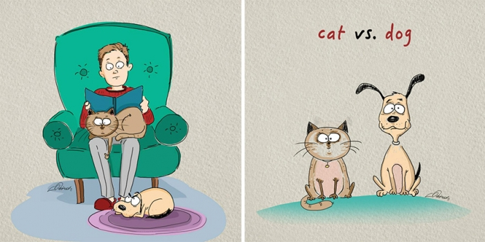 Cats Vs Dogs (1)