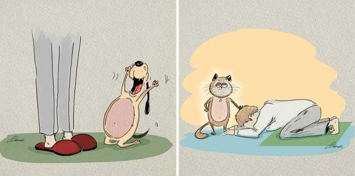 Cats Vs Dogs (6)