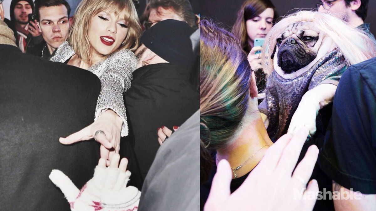 DOUG-THE-PUG-taylor-swift-meeting fans