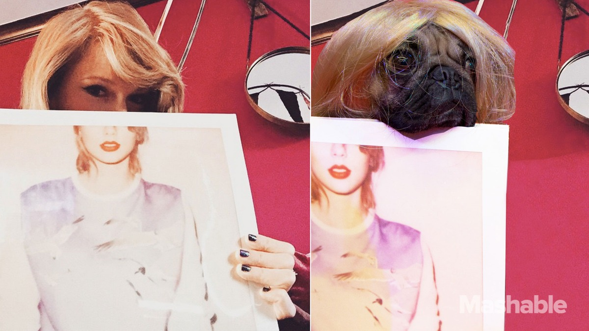 DOUG-THE-PUG-taylor-swift-holding her portrait