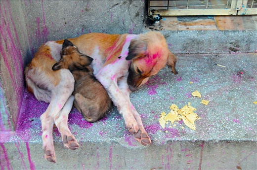 Dogs_of_Jodhpur_1