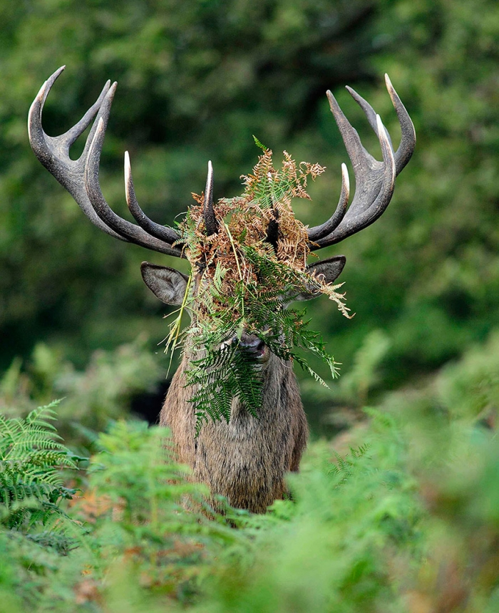 Funny Winners Of The 2015 Comedy Wildlife Photography Awards (2)
