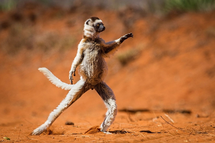 Funny Winners Of The 2015 Comedy Wildlife Photography Awards (4)