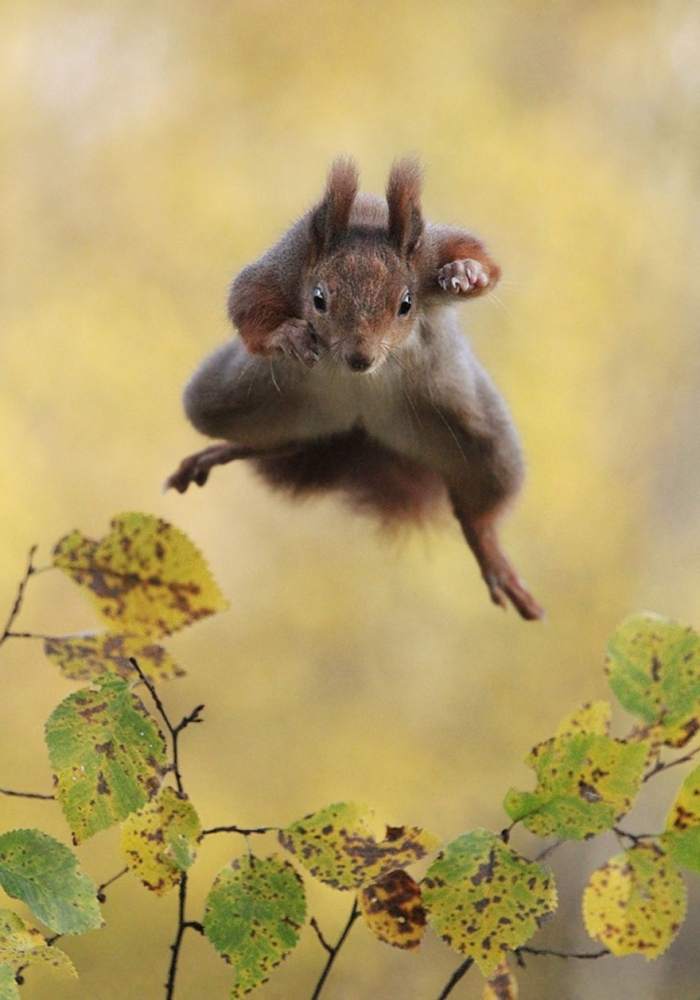 Funny Winners Of The 2015 Comedy Wildlife Photography Awards (8)