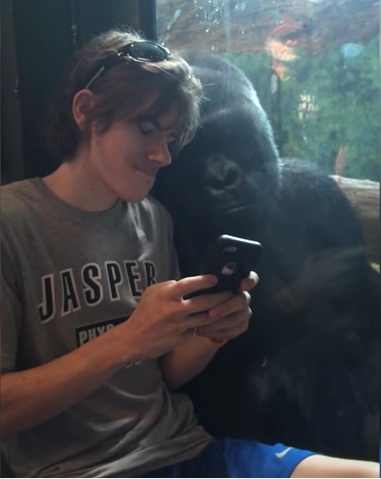 He showed a gorilla photos of other gorillas on his phone. 3