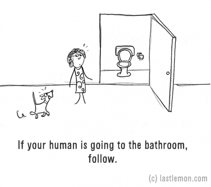 How to be a dog (9)