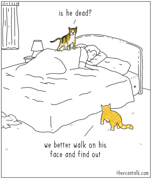 If animals could talk (1)