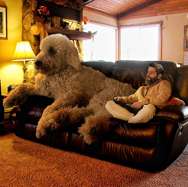 Photographer Photoshops His Dog Into A Giant (1)