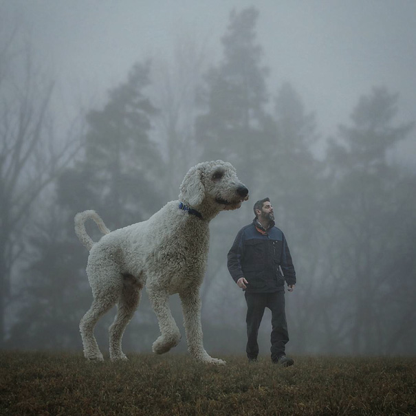 Photographer Photoshops His Dog Into A Giant (11)