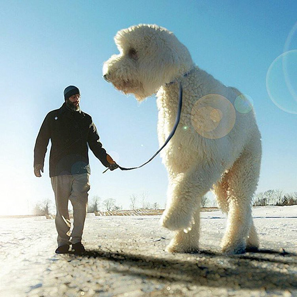 Photographer Photoshops His Dog Into A Giant (13)