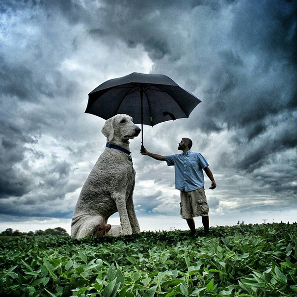 Photographer Photoshops His Dog Into A Giant (14)