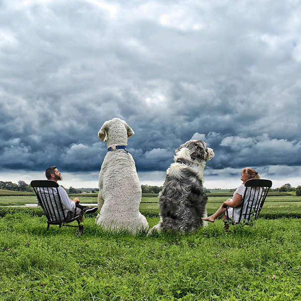 Photographer Photoshops His Dog Into A Giant (15)