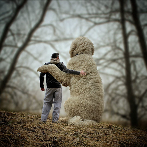 Photographer Photoshops His Dog Into A Giant (18)