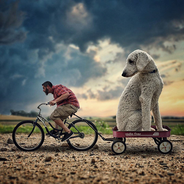 Photographer Photoshops His Dog Into A Giant (2)