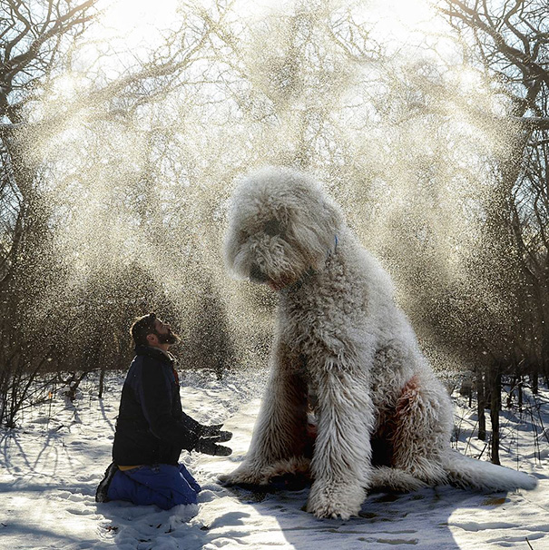 Photographer Photoshops His Dog Into A Giant (4)