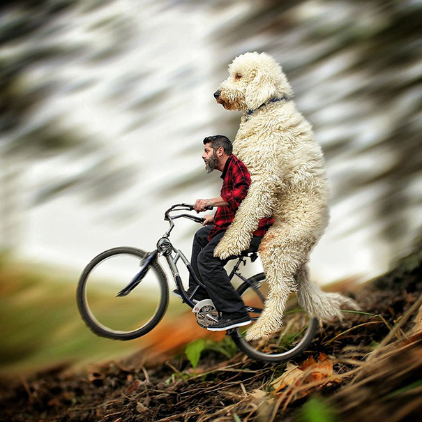 Photographer Photoshops His Dog Into A Giant (7)