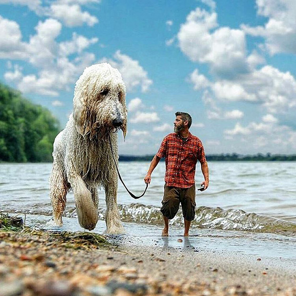 Photographer Photoshops His Dog Into A Giant (9)