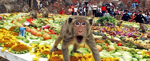 The-Monkey-Buffet-Festival