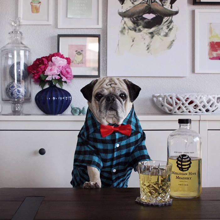 The Most Stylish Bartender (10)