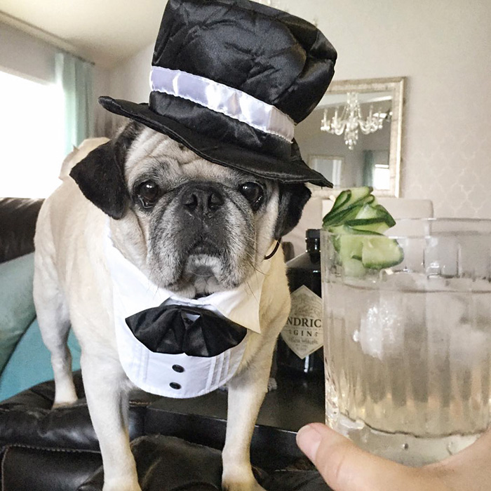 The Most Stylish Bartender (11)