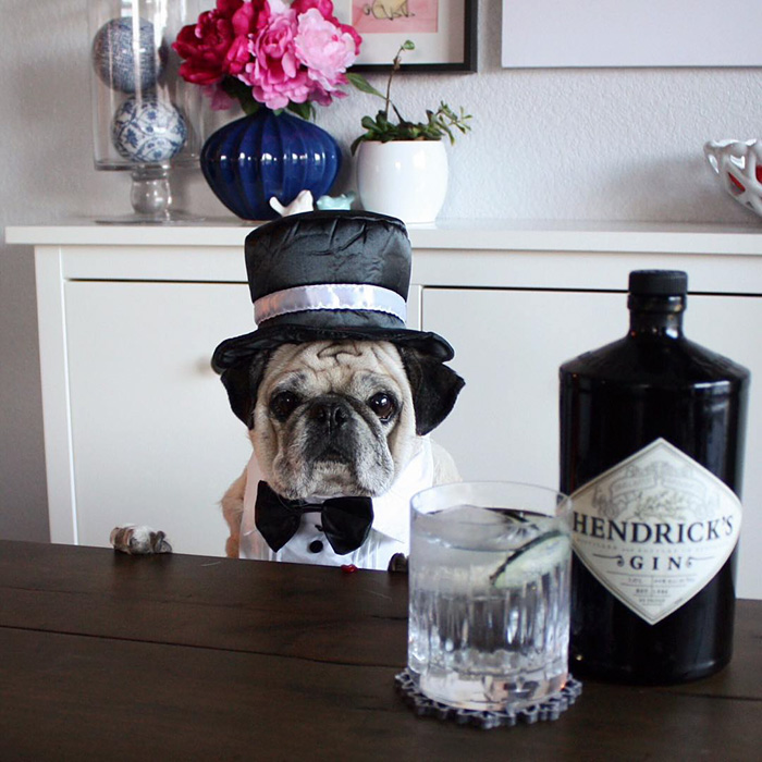 The Most Stylish Bartender (12)