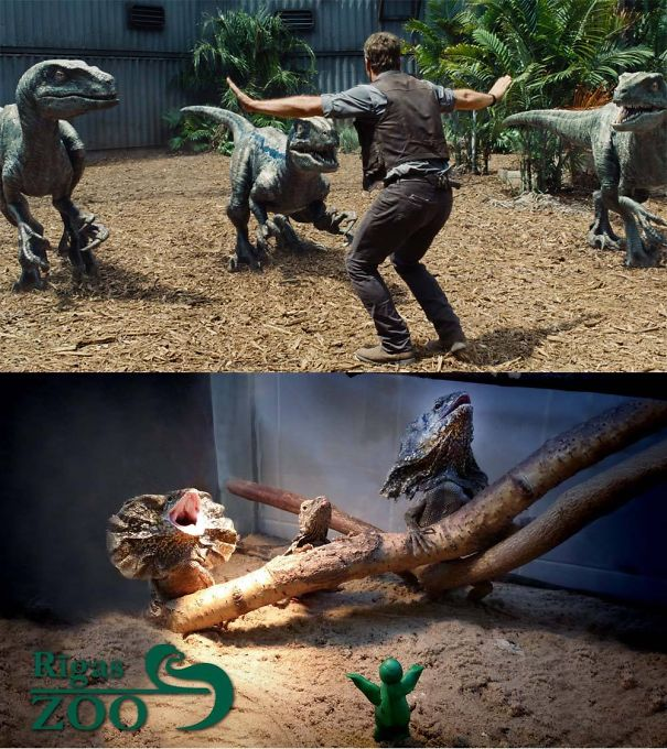 The famous raptor taming scene in Jurassic World copied with lizards