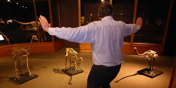 The famous raptor taming scene in Jurassic World copied with skeletons