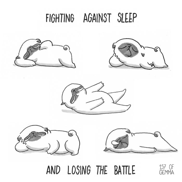 What It's Like To Live With A Pug (9)