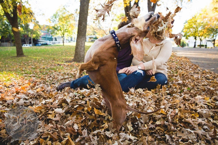 Wiener Dog Photobombs Couple's Engagement Photos (4)