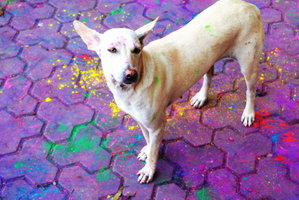 a_dog_on_holi_day_by_ilianayusoff-d62tnc0
