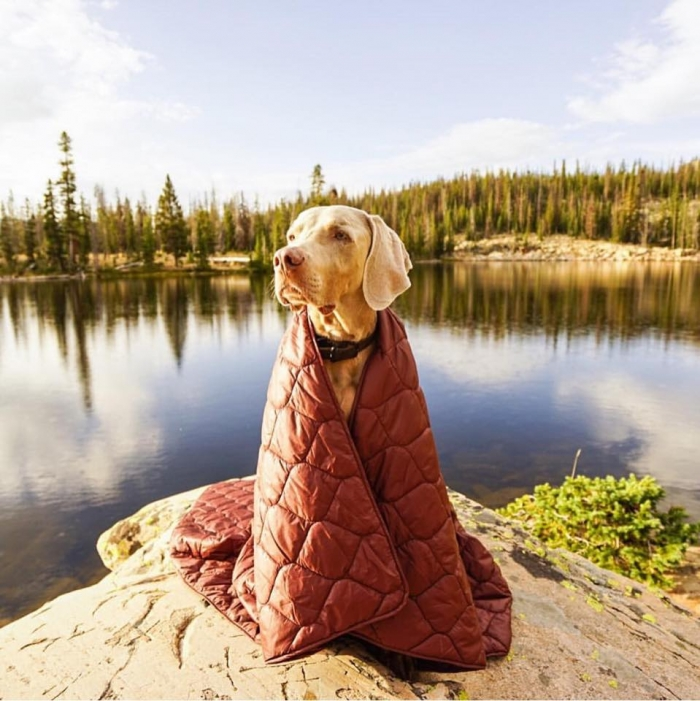 camping with dogs blanket