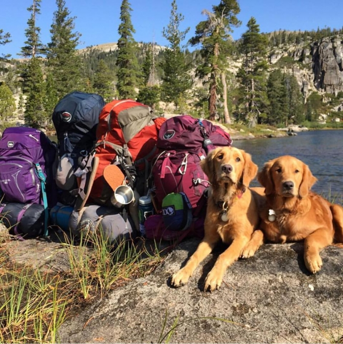 camping with dogs dogs