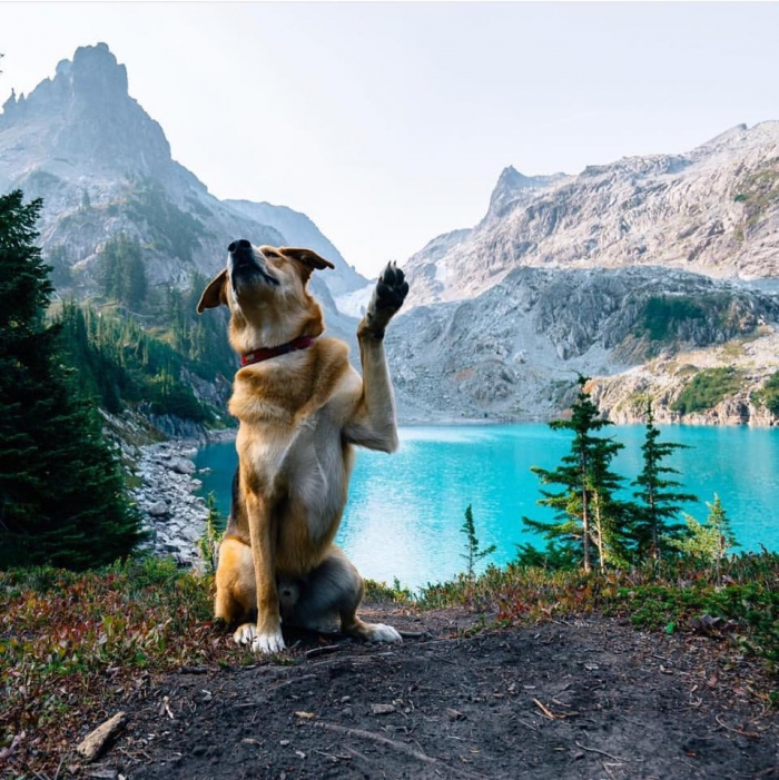 camping with dogs high 5