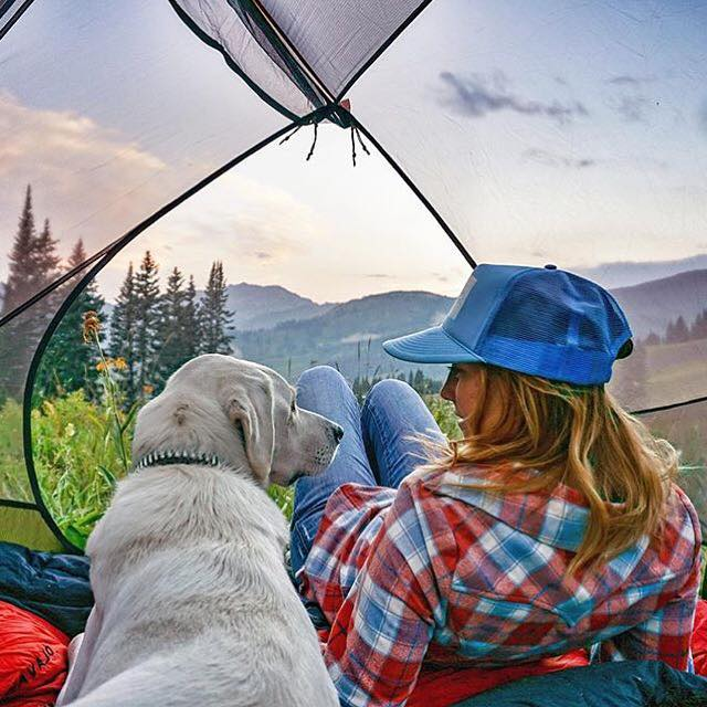 camping with dogs in the tent