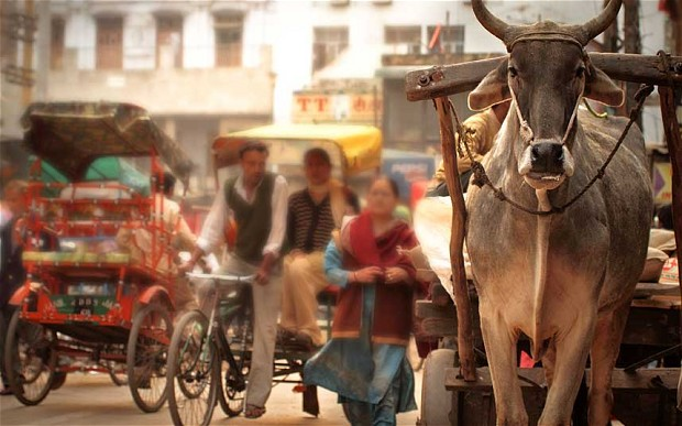 cow_cart_rickshaw