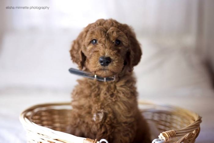 cute puppy photoshoot (11)