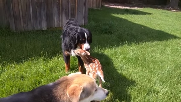doggie and fawn