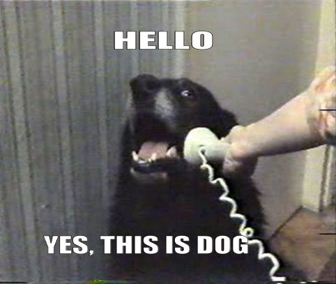 funny-dog-talking-on-the-phone