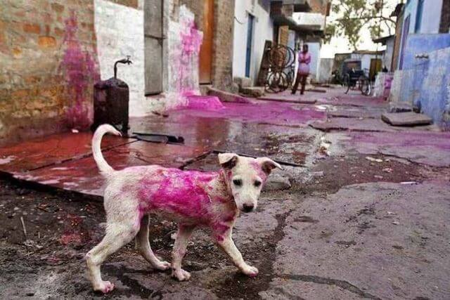 holi-no-dog-color-1