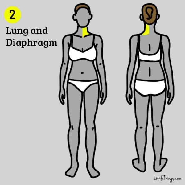 lung and diaphragm